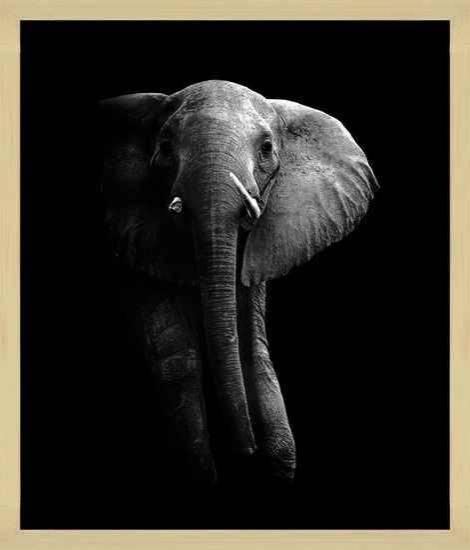 Art Print on Demand Elephant!