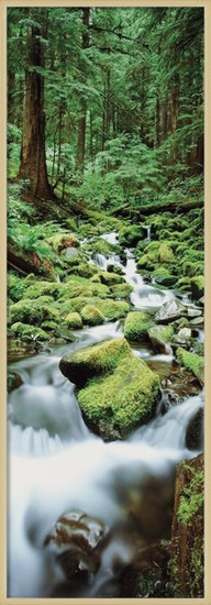 Forest waterfall Poster