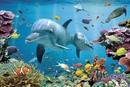 Tropical uderwater ocean