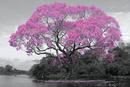 Tree - Pink Blossom