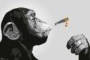 Steez - Monkey Smoking